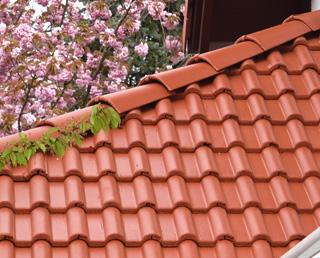 dachbeschichtung dachreinigung dachbeschichtungen und dachsanierungen in hessen bundesweit. Black Bedroom Furniture Sets. Home Design Ideas